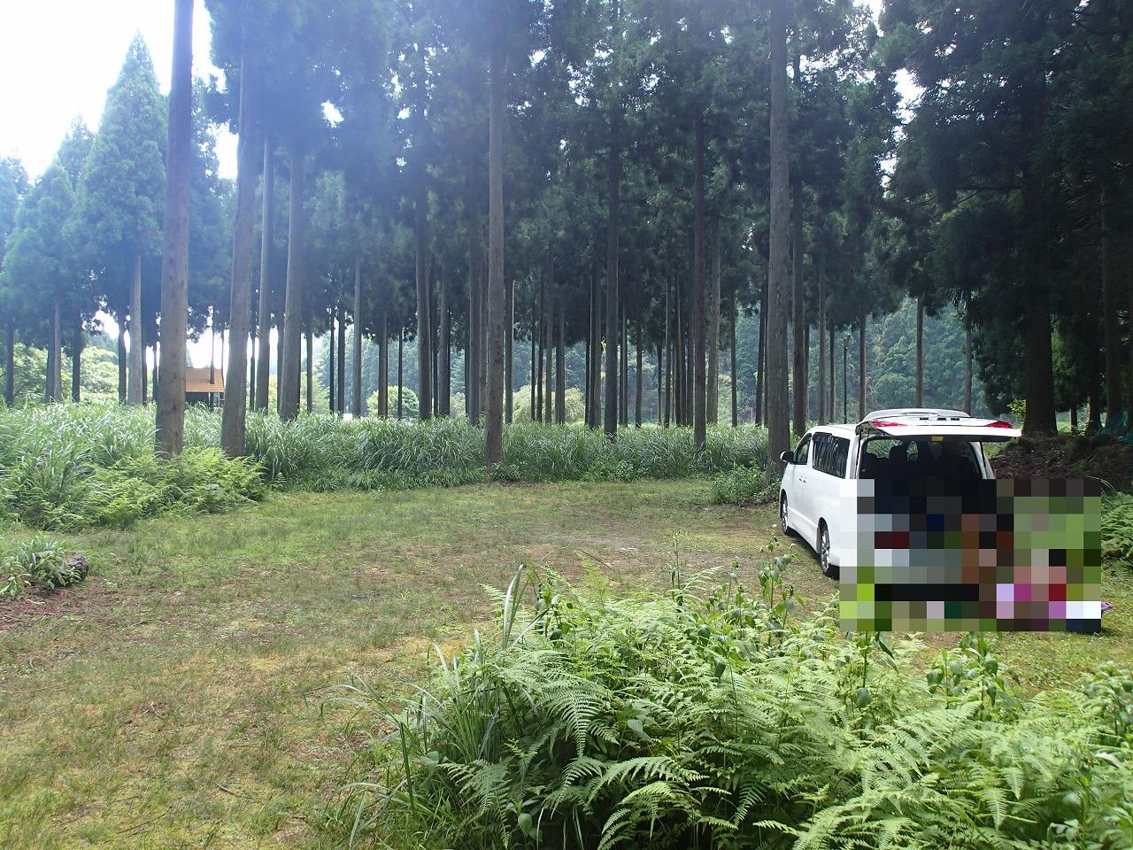 テント設営前の林間サイト