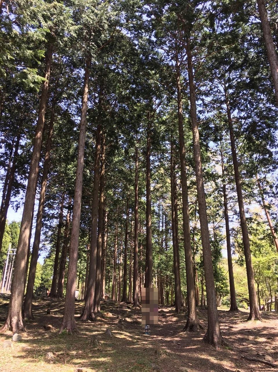 林など自然がいっぱい