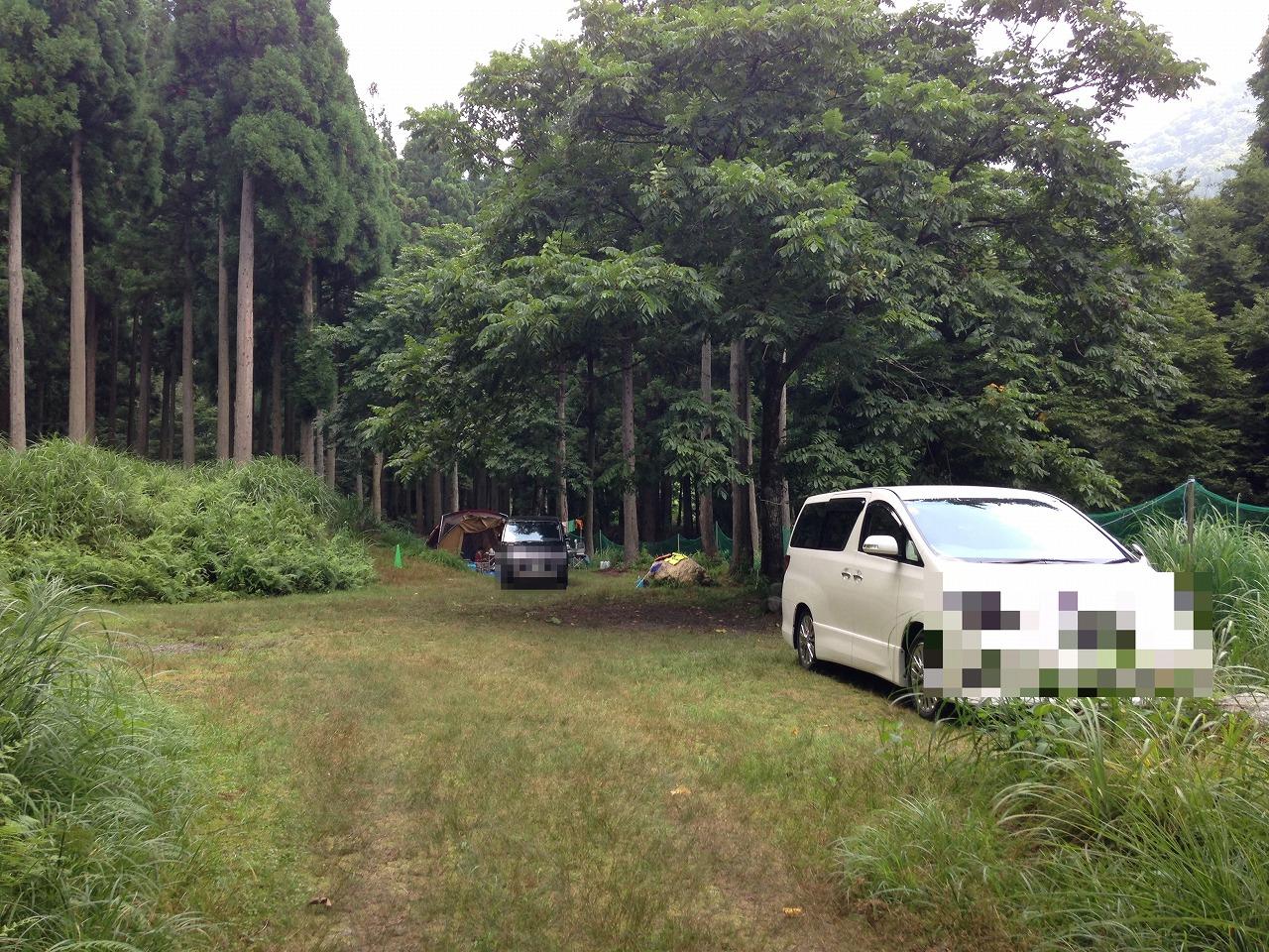 林間サイトの様子