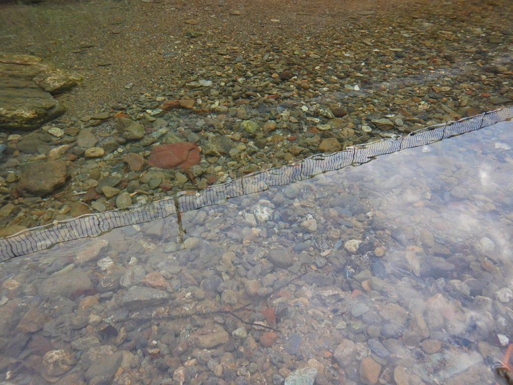 小川の水質