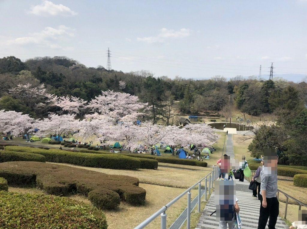桜が満開の太陽ヶ丘