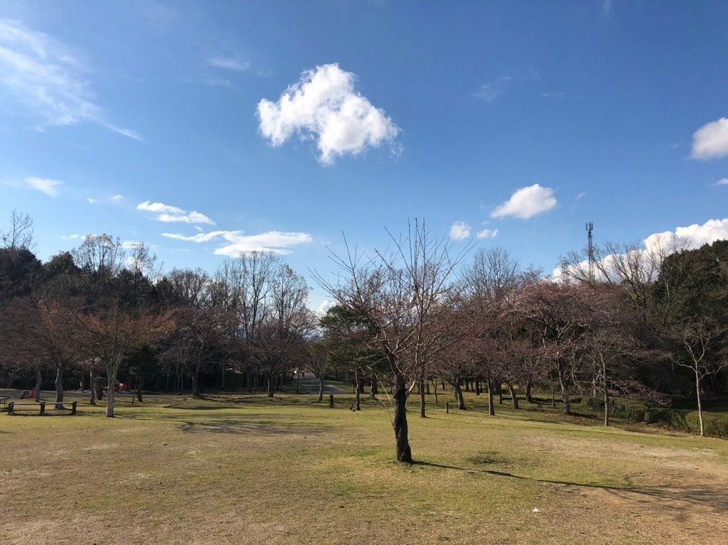 桜はこれから咲く