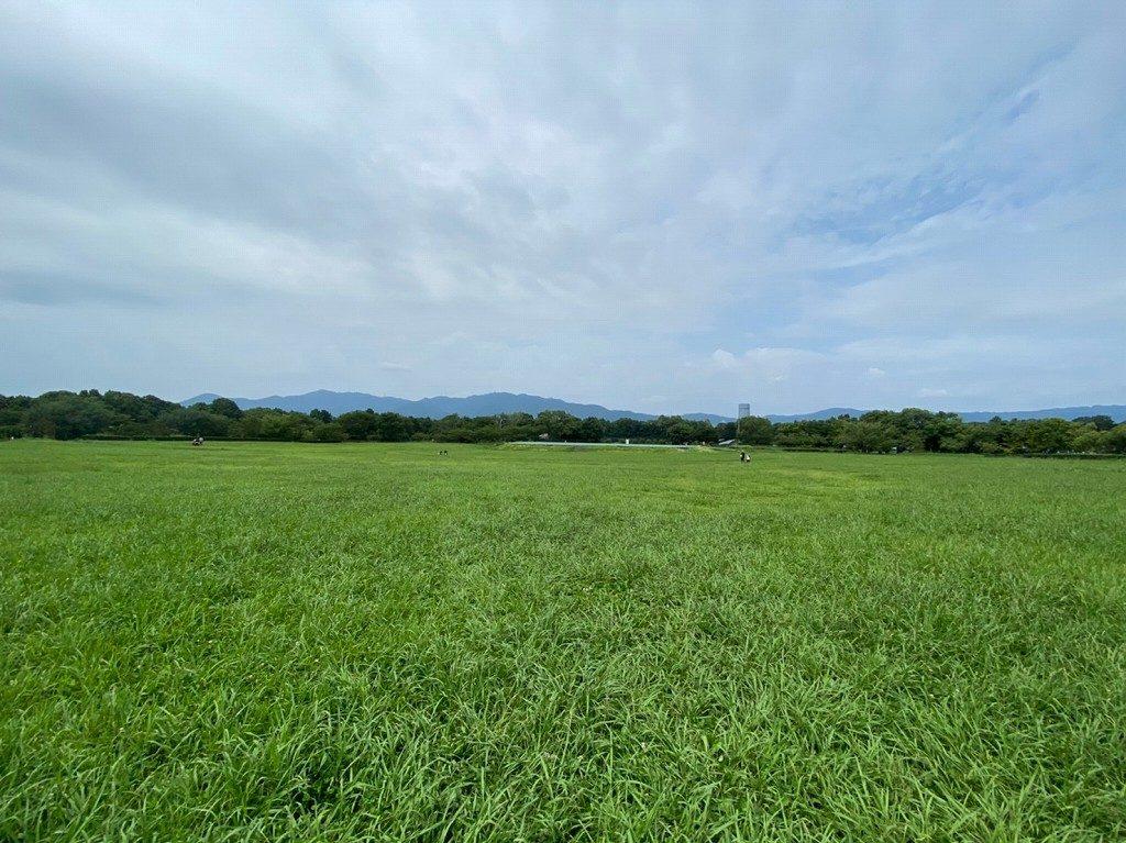 めちゃくちゃ広い芝生