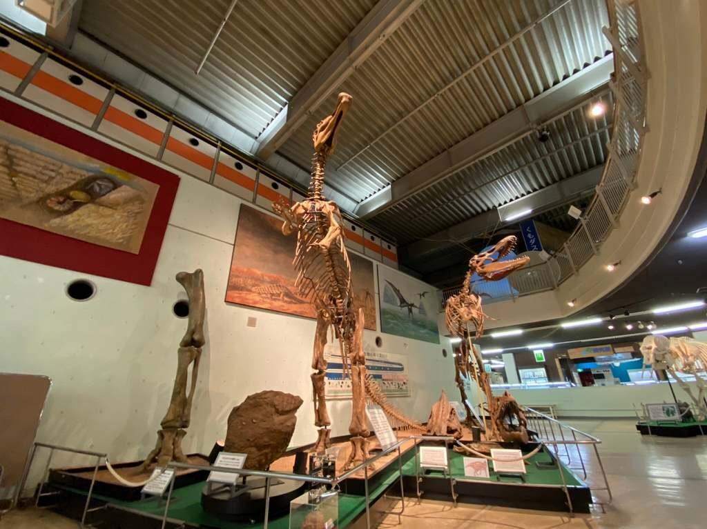 大きな恐竜の化石